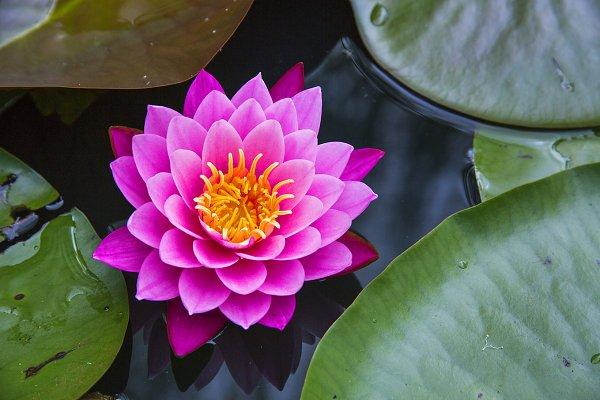 Pierderea în Greutate - Cum Funcționează Lotus Elise