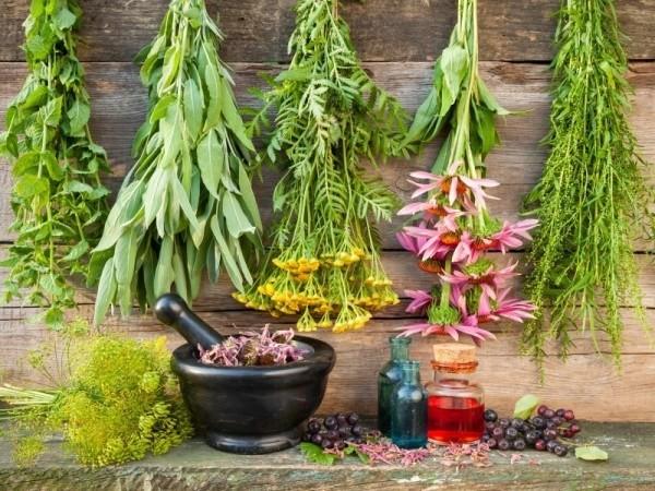 5 plante medicinale pentru slabit