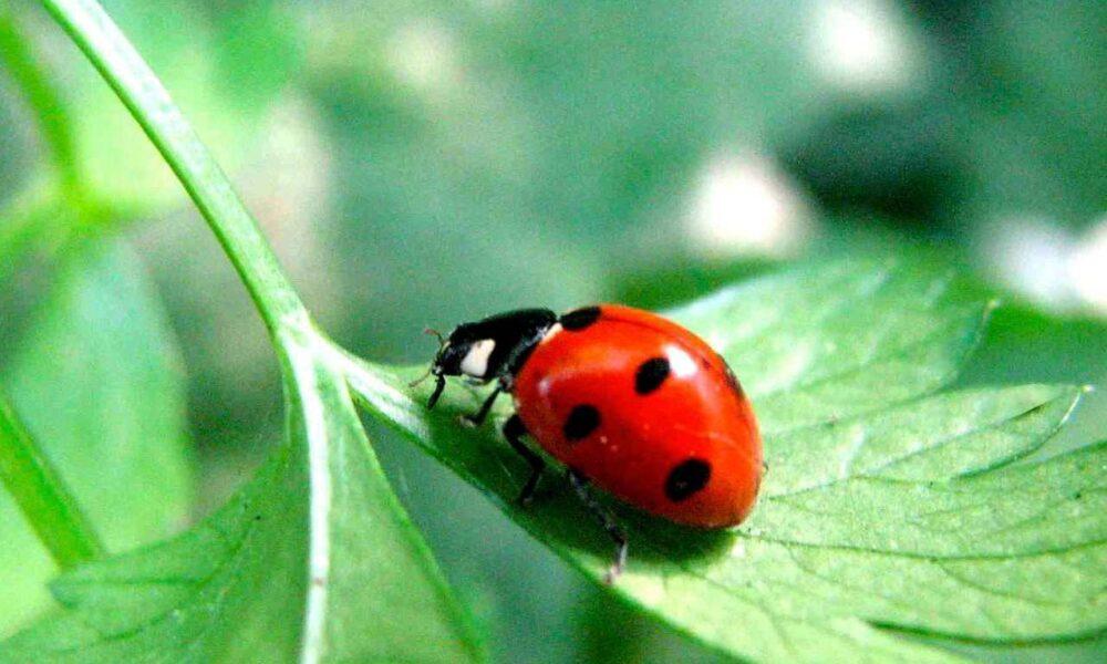 Insecte utile pentru grădina