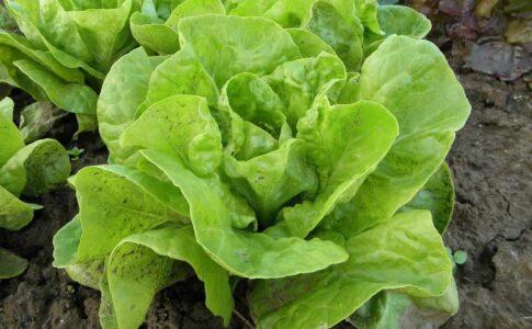 salata verde beneficii