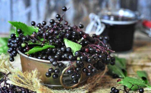 Ce beneficii au fructele de soc